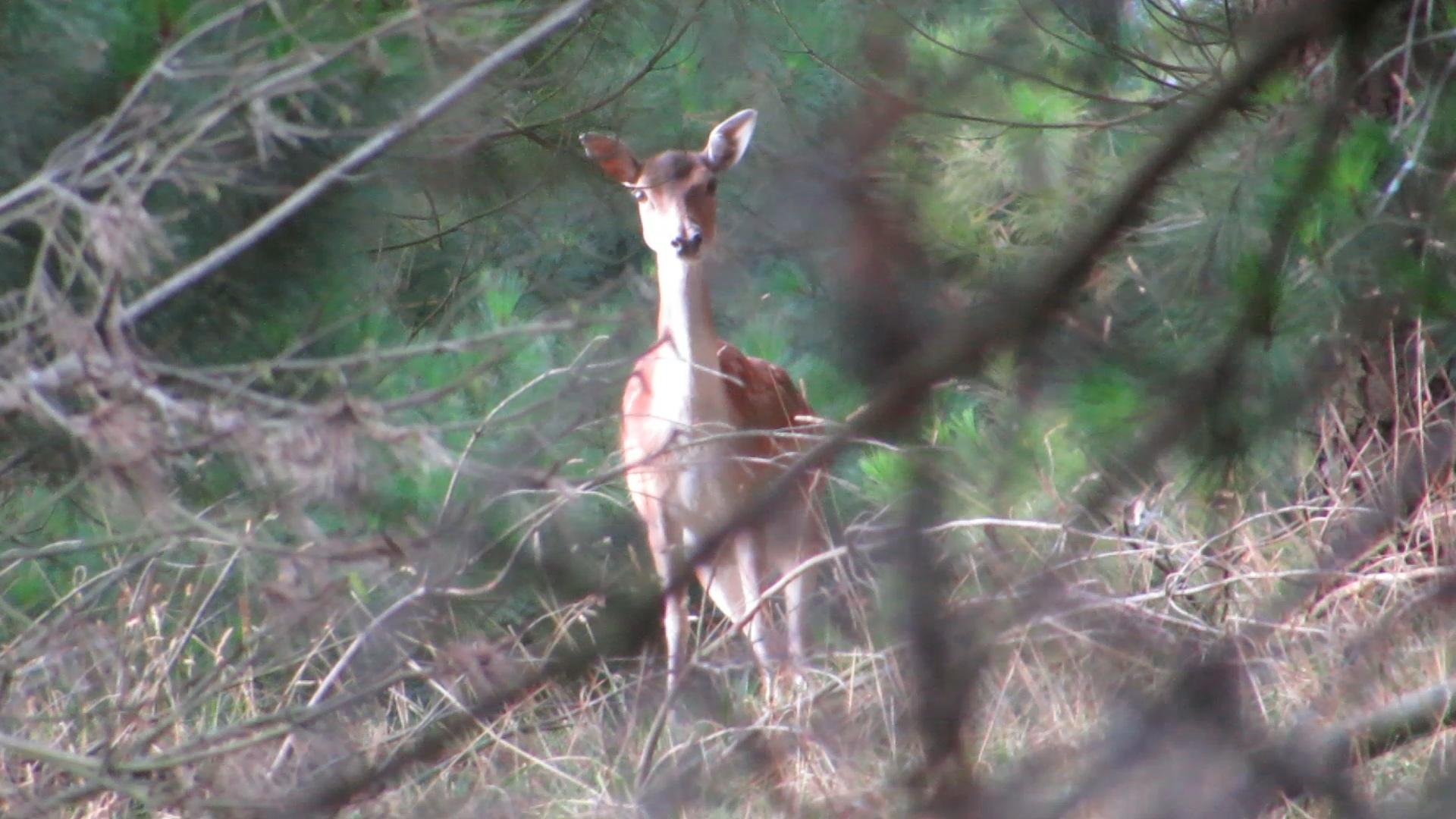 Name:  Frame-28-02-2017-02-31-19.jpg Views: 357 Size:  560.5 KB