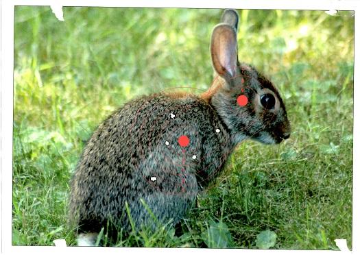 Name:  Bunny.jpg Views: 154 Size:  127.4 KB