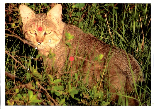 Name:  Cat.jpg Views: 144 Size:  146.2 KB