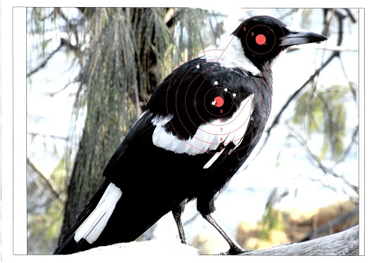 Name:  Magpie.jpg Views: 151 Size:  93.4 KB