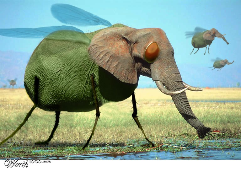 Name:  elephant fly.jpg Views: 2884 Size:  112.7 KB