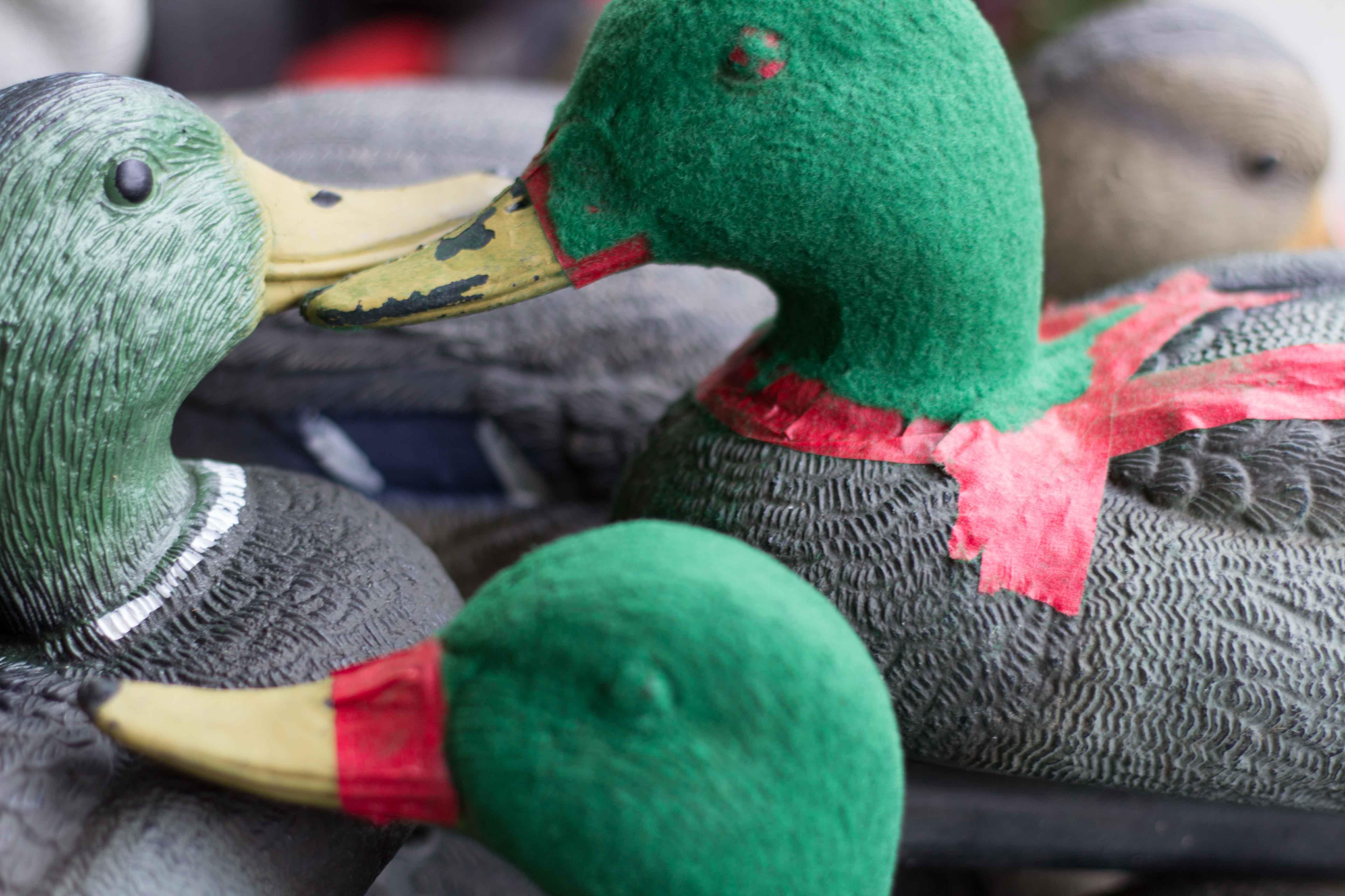 Name:  Flocking-3.jpg Views: 188 Size:  511.9 KB