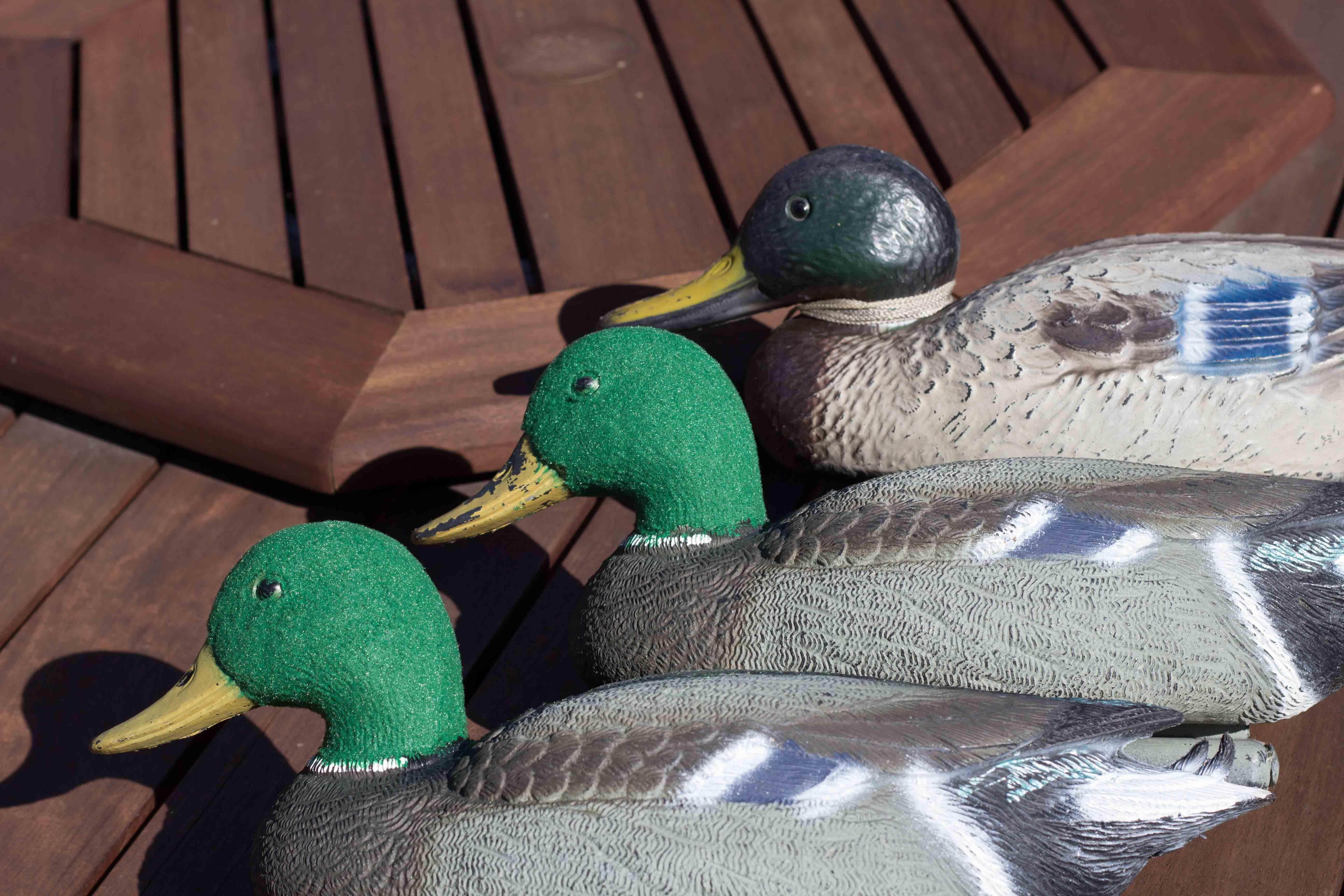 Name:  Flocking-5.jpg Views: 185 Size:  565.7 KB