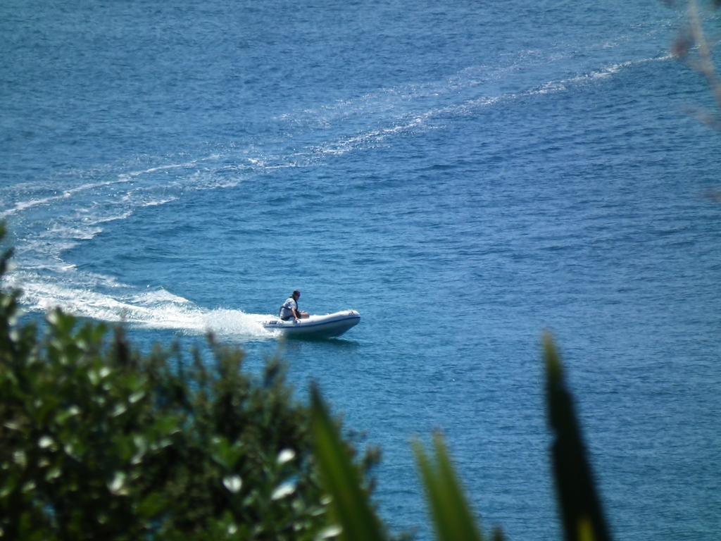 Name:  sharkbait.jpg Views: 1594 Size:  369.1 KB