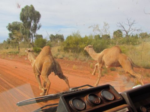 Name:  Camel pic.jpg Views: 651 Size:  39.5 KB