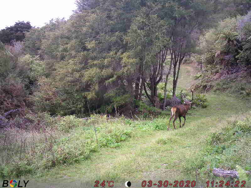 Name:  2nd stag.JPG