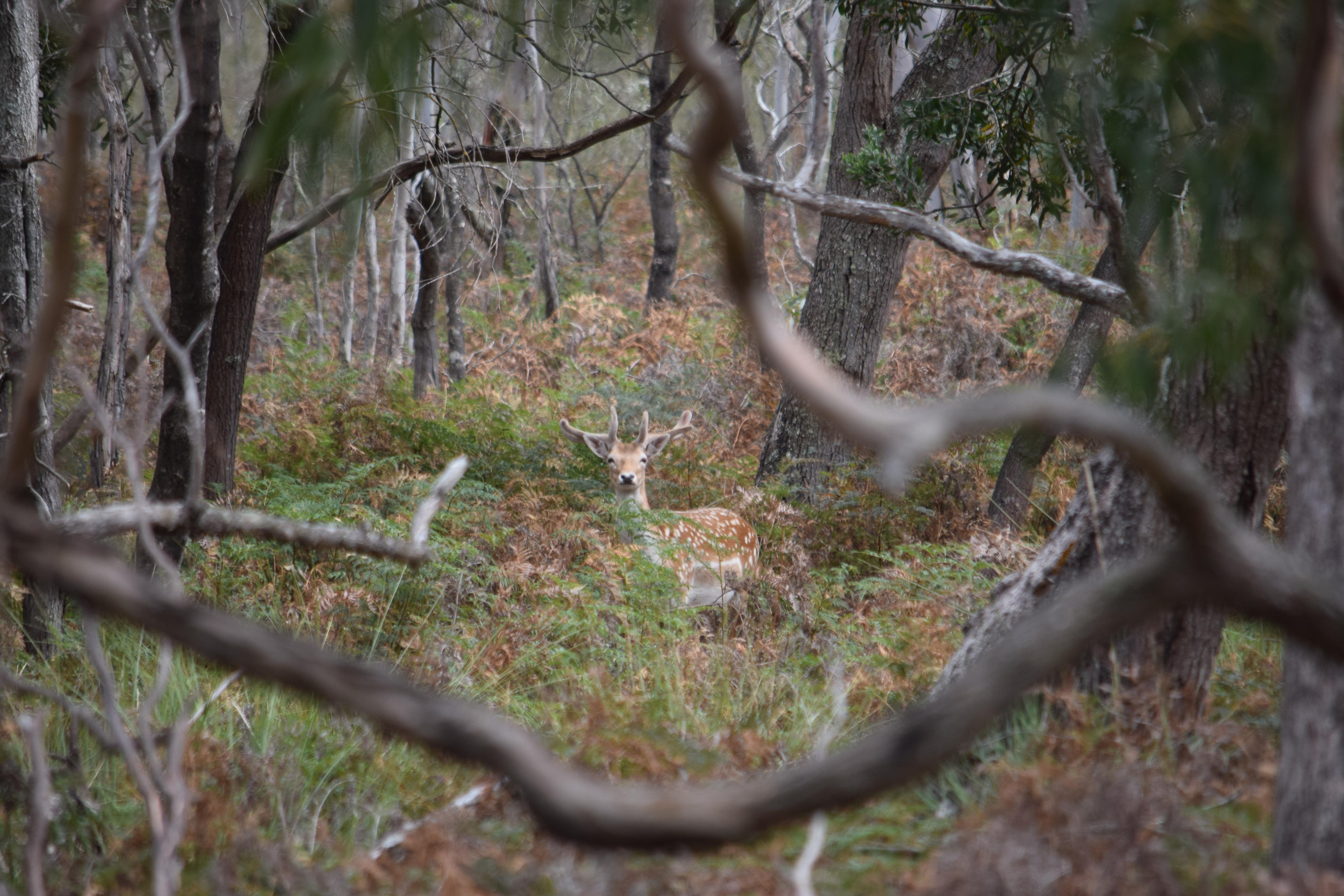 Name:  Z_spotted by the buck.jpg Views: 221 Size:  1.08 MB
