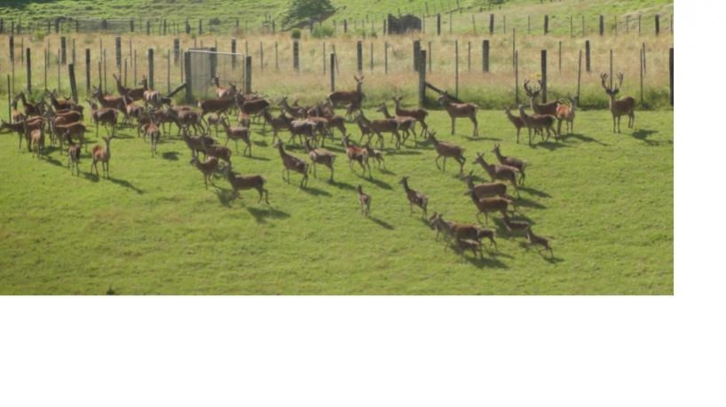 Name:  Deer2.jpg