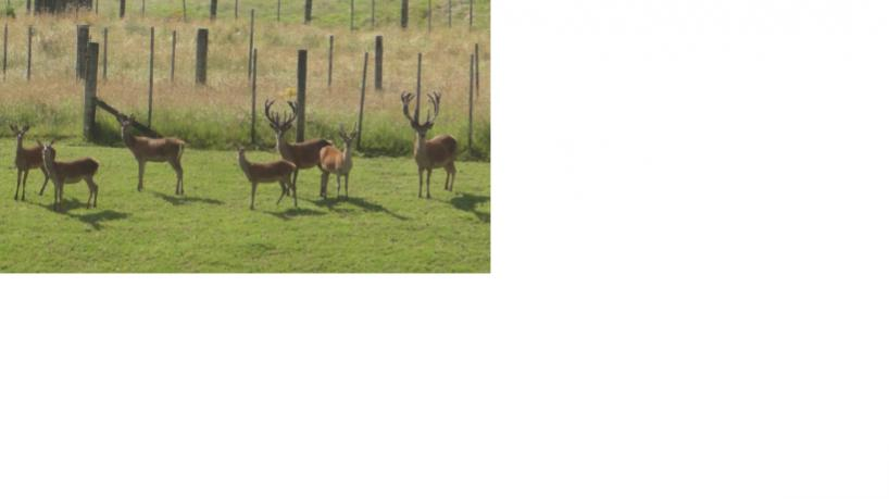 Name:  Deer1.jpg