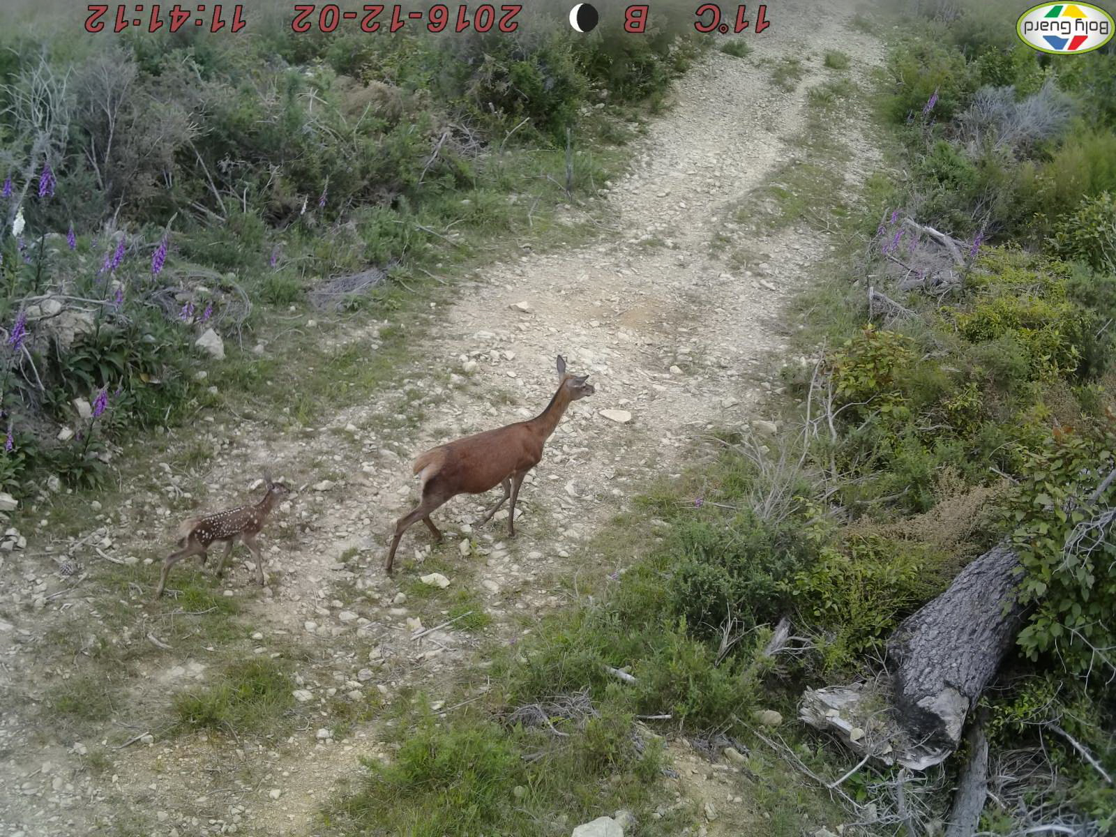 Name:  Dec 2nd 2016 Hind and Fawn.jpg