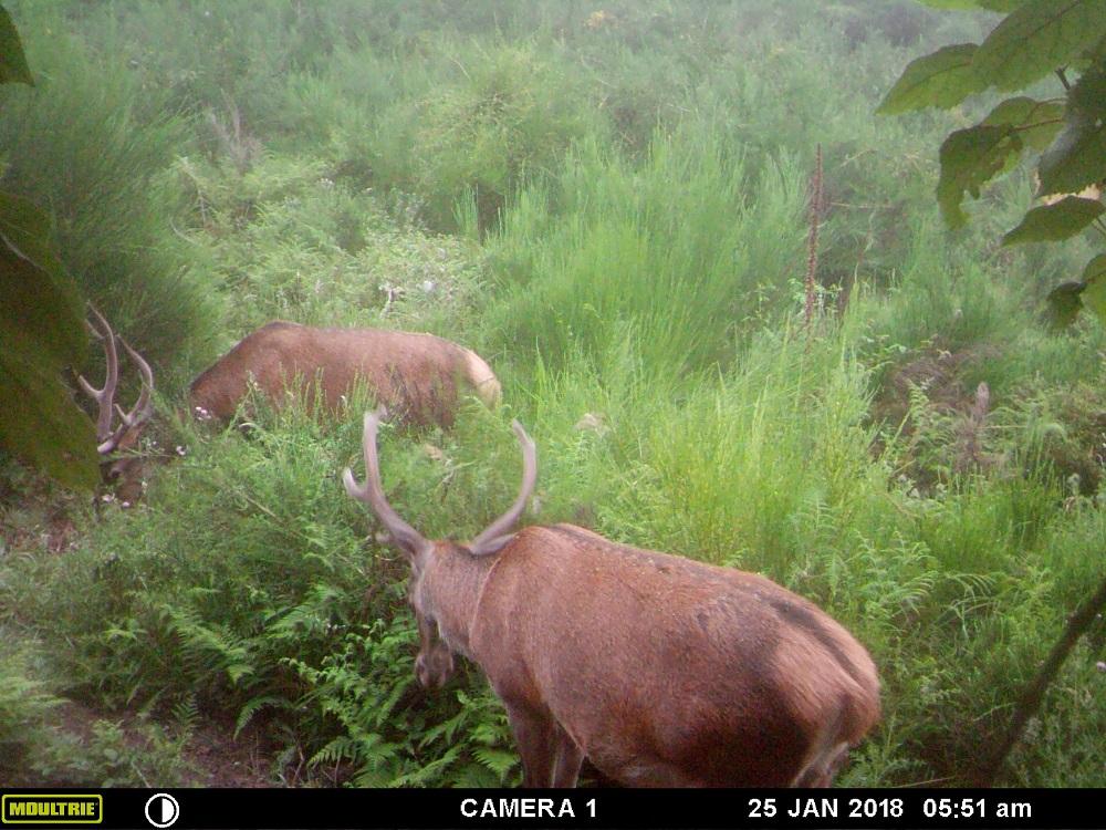 Name:  Trail cam reds.jpg Views: 426 Size:  324.6 KB