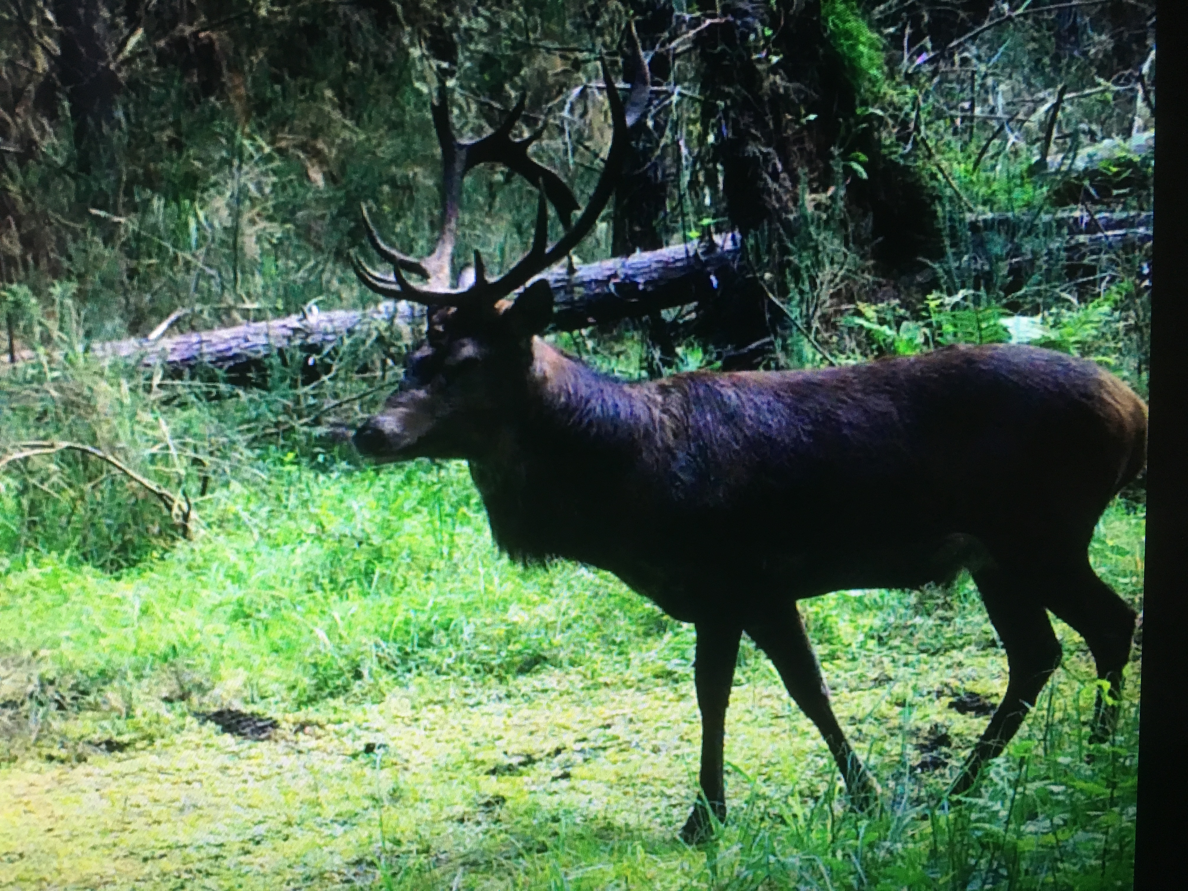 Name:  15 point Stag 2018.JPG Views: 333 Size:  4.34 MB