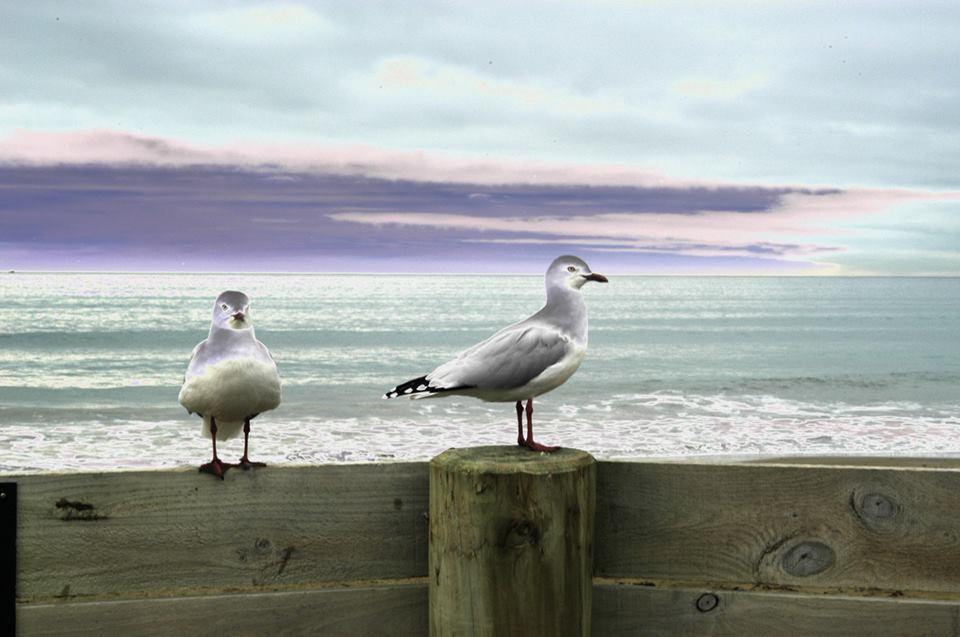 Name:  seagulls.jpg Views: 178 Size:  68.0 KB