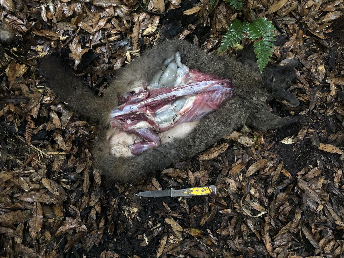 Name:  Possum butchery.jpg Views: 217 Size:  1.63 MB