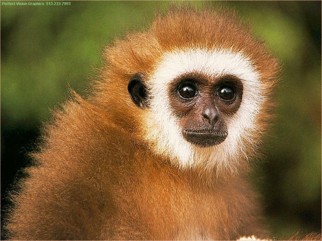 Name:  monkey.jpg Views: 299 Size:  221.3 KB