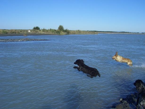 Name:  Dogs in river 9-1-2011 055.JPG Views: 139 Size:  125.7 KB