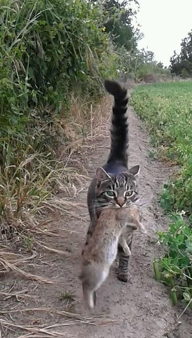 Name:  Cat.jpg Views: 140 Size:  135.7 KB